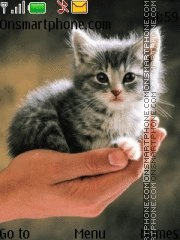 Cute Kitten 02 es el tema de pantalla