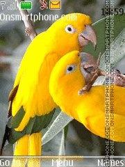Beautiful Parrots theme screenshot