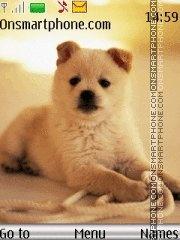 Cute Dog 07 es el tema de pantalla