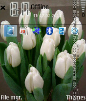 White tulip theme screenshot
