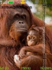 Orangutans theme screenshot