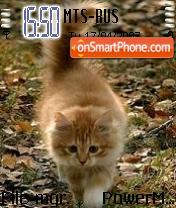 Cat BD theme screenshot