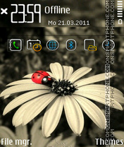 Daisy fp1 theme screenshot