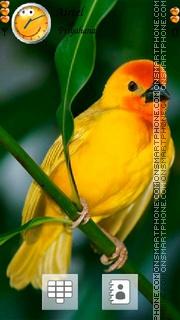 Cute Bird 01 es el tema de pantalla