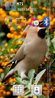 Bird 03 tema screenshot