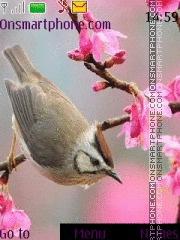 Bird es el tema de pantalla