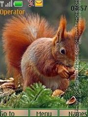 Скриншот темы Little squirrel