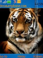Tiger 40 theme screenshot
