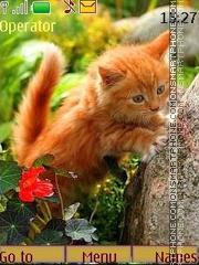 Скриншот темы Red kitten