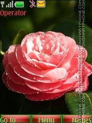 Camellias anim swf theme screenshot