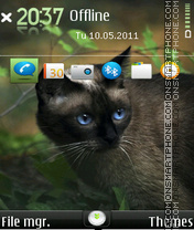 Hungry cat 01 theme screenshot