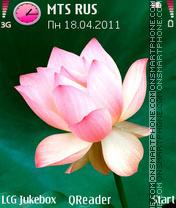Pink-Lily es el tema de pantalla