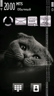 Beautiful Kitten theme screenshot
