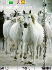 Horses 06 theme screenshot